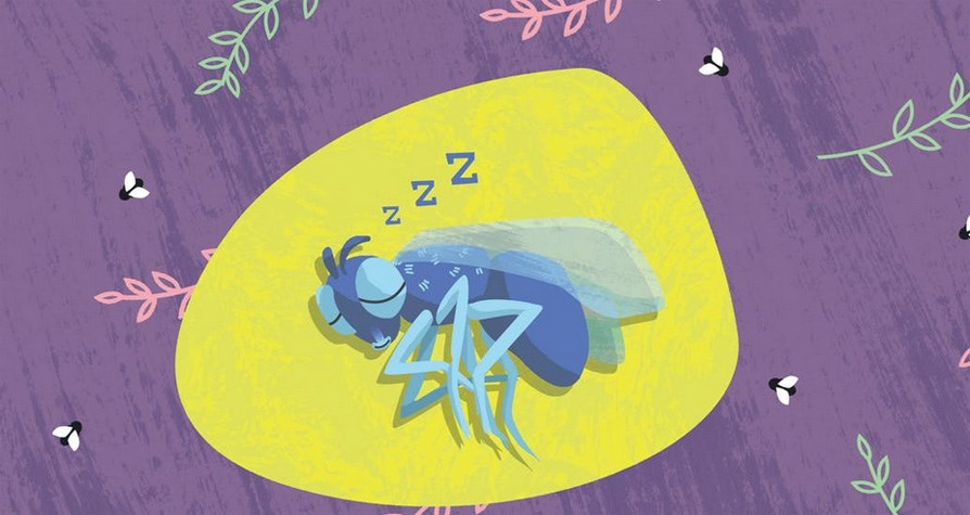 Curious Kids: Where do flies sleep?