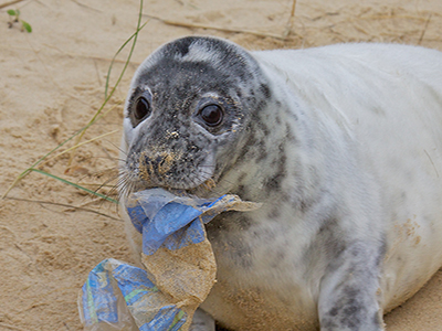 Act Wild for Seals