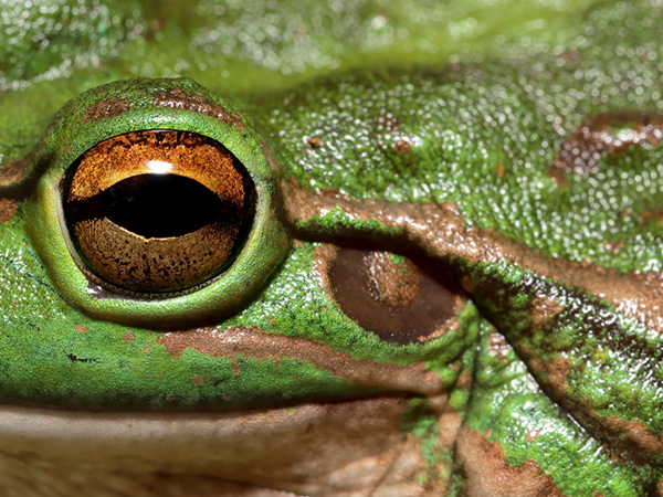 Act Wild for Frogs