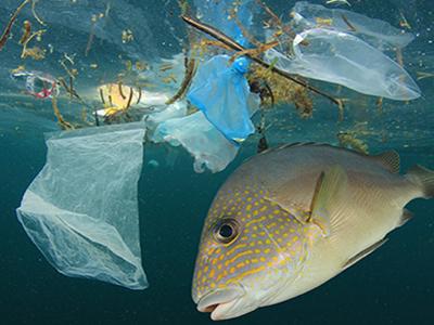 Plastic Oceans: Rethink Plastic