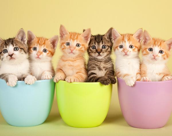 Divide it up: kittens