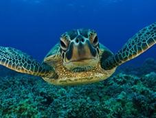 A Turtle's Eye View